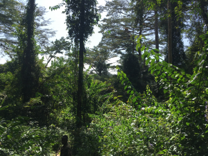organic reforestation