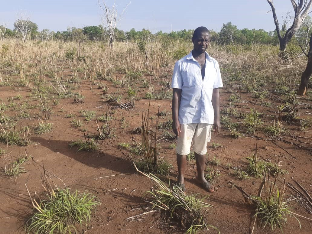 potentiel de reforestation potential aufforestungspotenzial