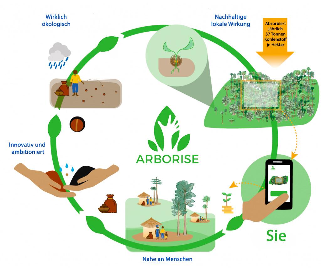 arboRise Ansatz ökologische Aufforstung partizipative Aufforstung effiziente Aufforstung nachhaltige Aufforstung