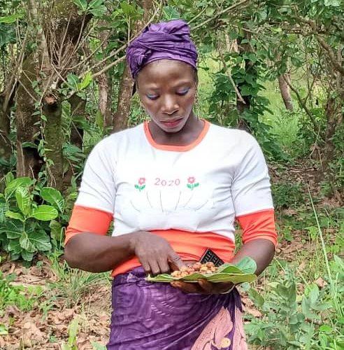 récolter les graines collecting seeds Samen sammeln