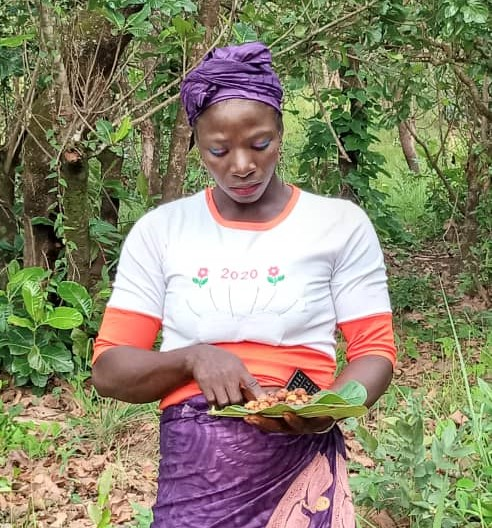 récolter les graines collecting seeds Saatgut ernten