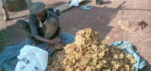 sacs de graines