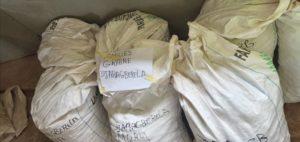 sacs de semence