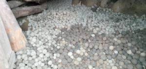tas de seedballs